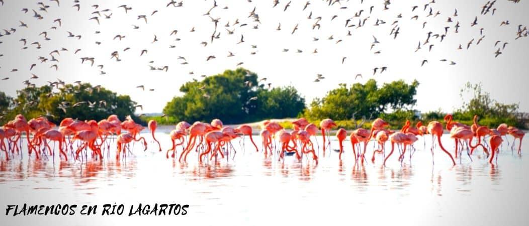 Flamencos Río Lagartos Las Coloradas