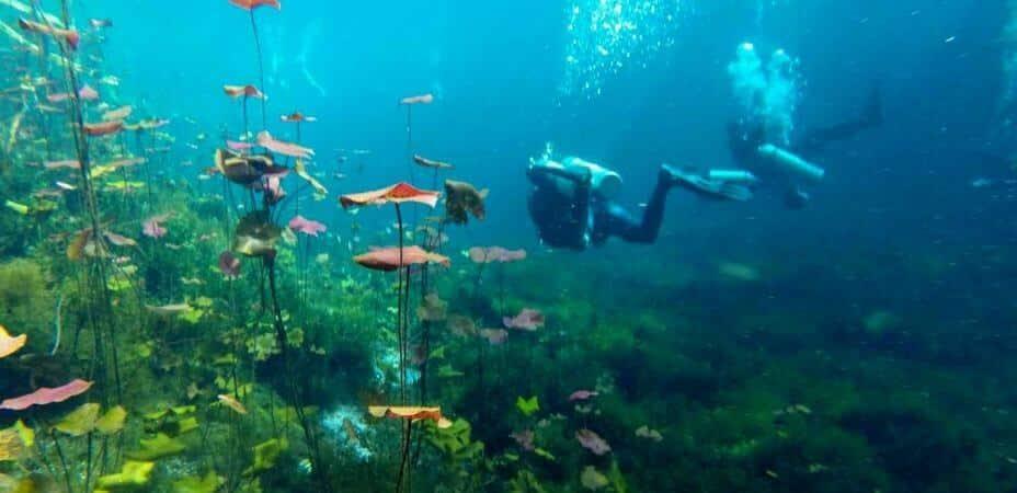 Carwash Cenote Diving